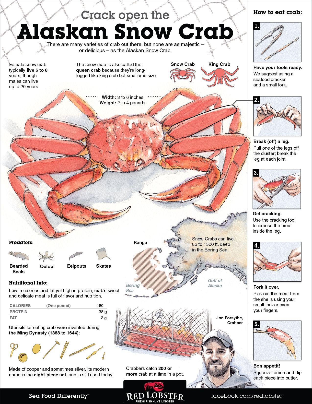 How To Eat Crab Visual Ly Alaskan Snow Crab Crab Crab Recipes