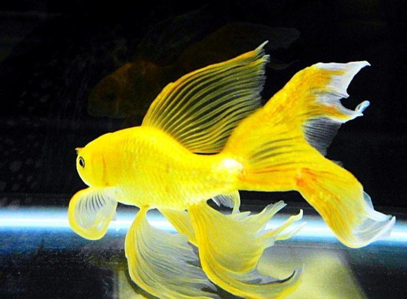 Pin Oleh Thoronman Di Fantasi Di 2020 Ikan Ikan Akuarium Ikan Tropis
