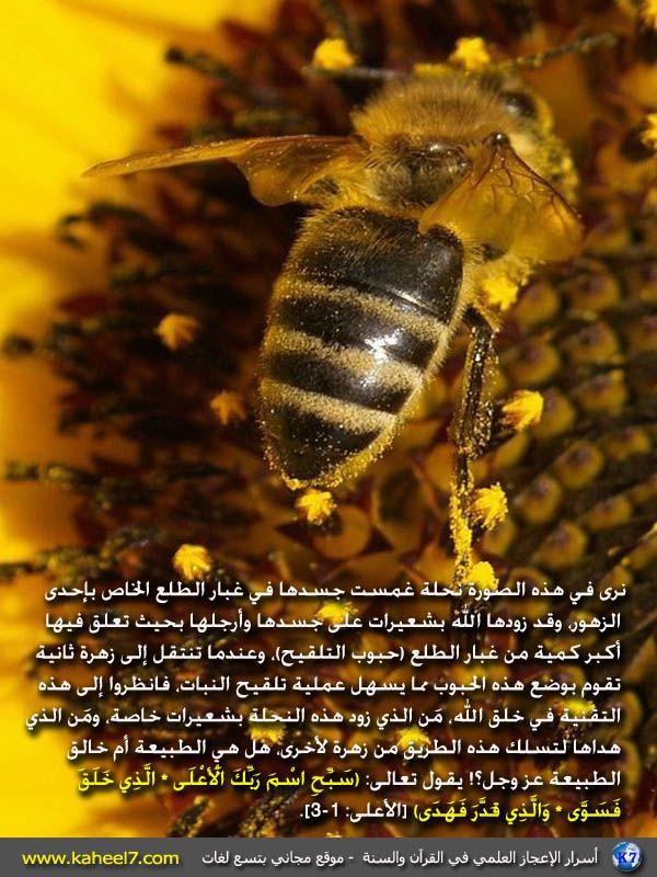 صورة وآية الحشرات وتلقيح النبات Islam And Science Miracles Of Quran Book Qoutes
