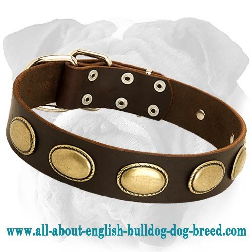 New Brand #Leather #Dog #Collar Decorated with Oval Plates $39.90 | www.all-about-english-bulldog-dog-breed.com