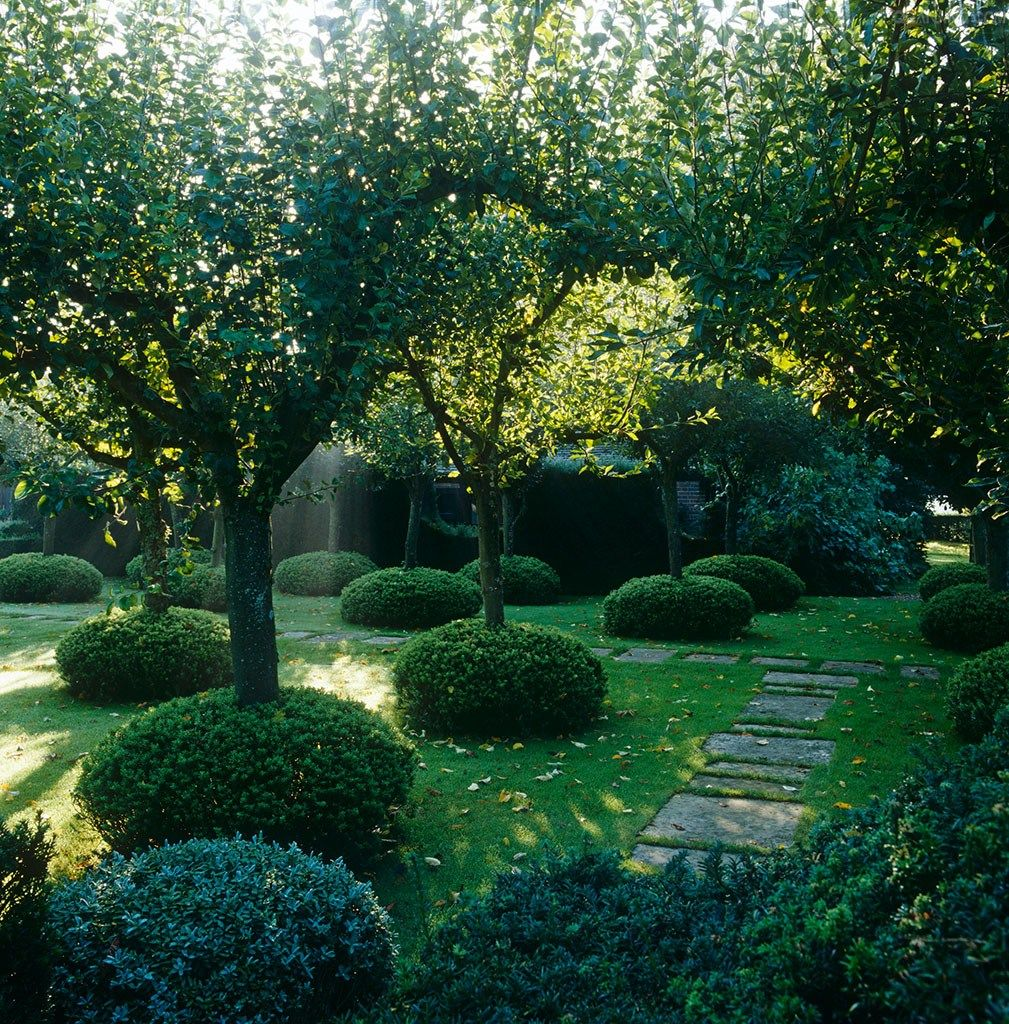 An Orchard Of Mixed English Apple Trees Each Trunk
