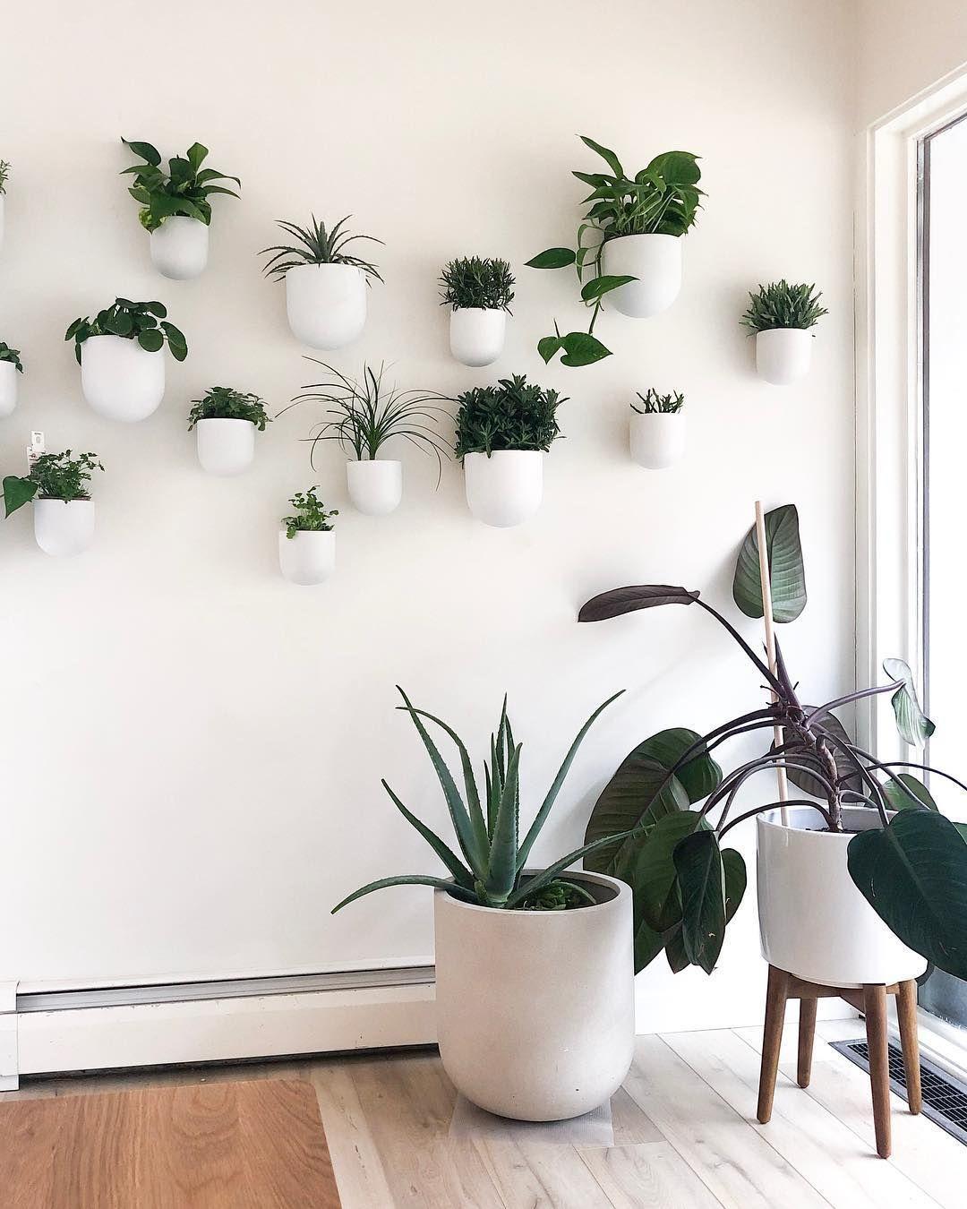 "Photo of MinnCenturyMod 丨 Claire Clemmer auf Instagram: ""Plant Wand g"