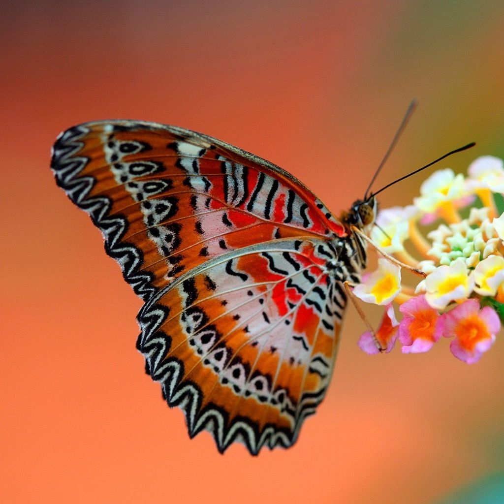 Mooie Vlinder With Images Most Beautiful Butterfly Butterfly On Flower Butterfly Wallpaper