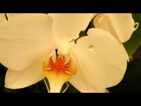 Rare Orchids Mostra Di Orchidee Rare Part 2 Hd
