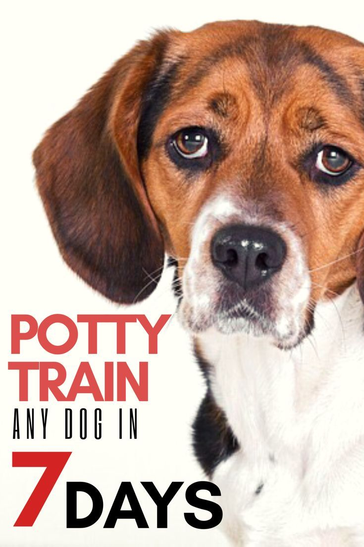 Potty Train Or Housebreak Any Dog Or Puppy In 7 Days Or Less
