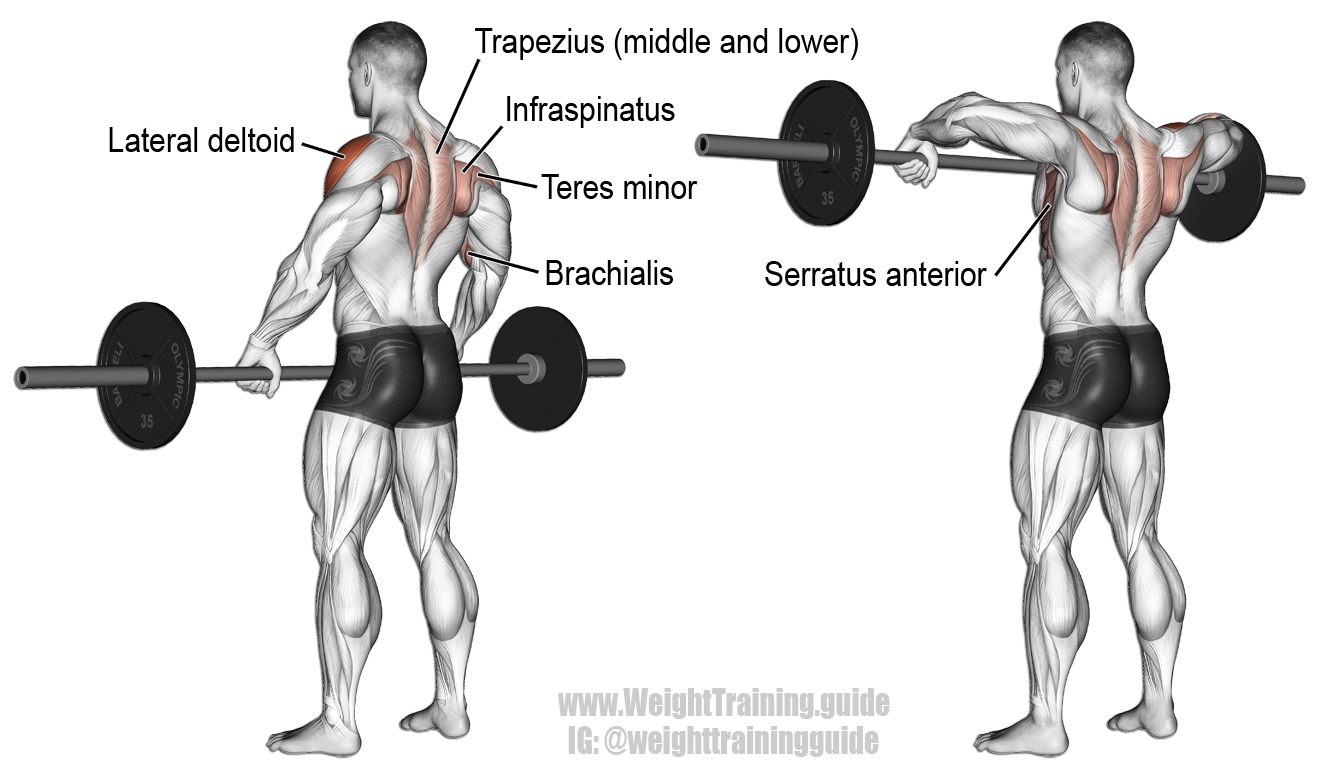 Wide grip upright row. A compound exercise. Target muscle ...