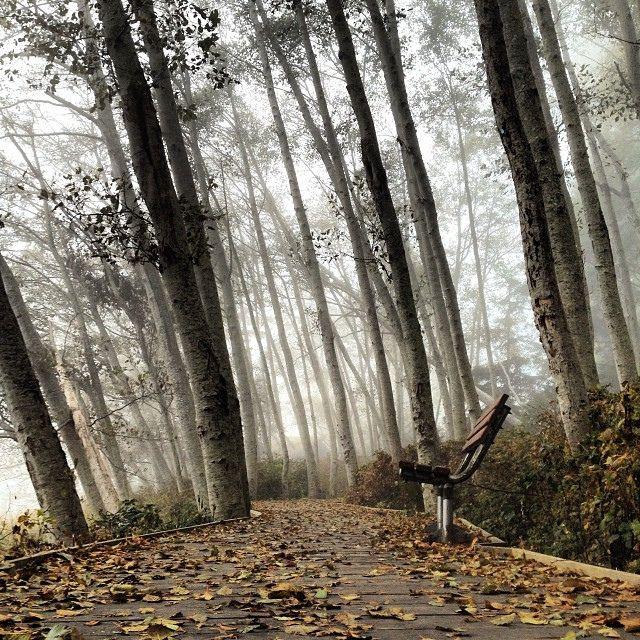foggy walk - fog and swell