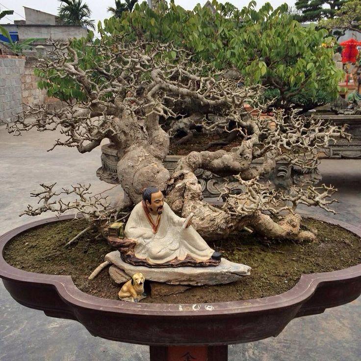 Bonsai 364 garten