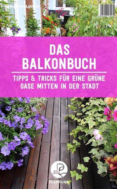 Pflanzen als Sichtschutz: Unsere Top 15 für Garten & Balkon #sichtschutzpflanzen Pflanzen als Sichtschutz: Unsere Top 15 für Garten & Balkon - Plantura #sichtschutzpflanzen