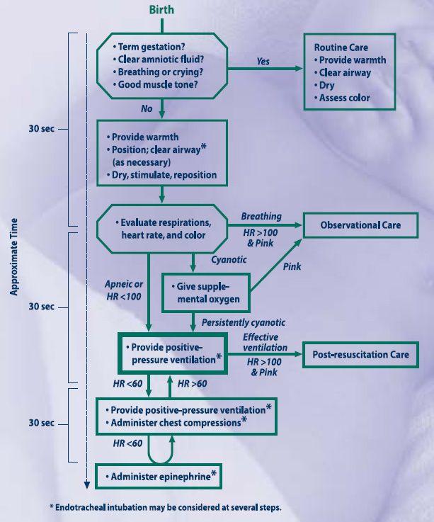labor birth flow chart - Google Search Midwifery Pinterest - neonatal nurse sample resume