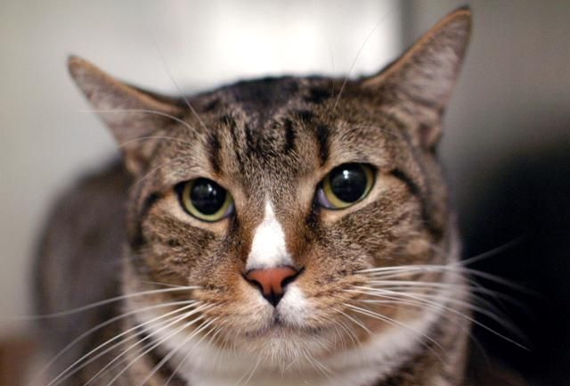 ***YOUNG FRIENDLY BOY DUMPED DUE TO MOM'S ALLERGIES