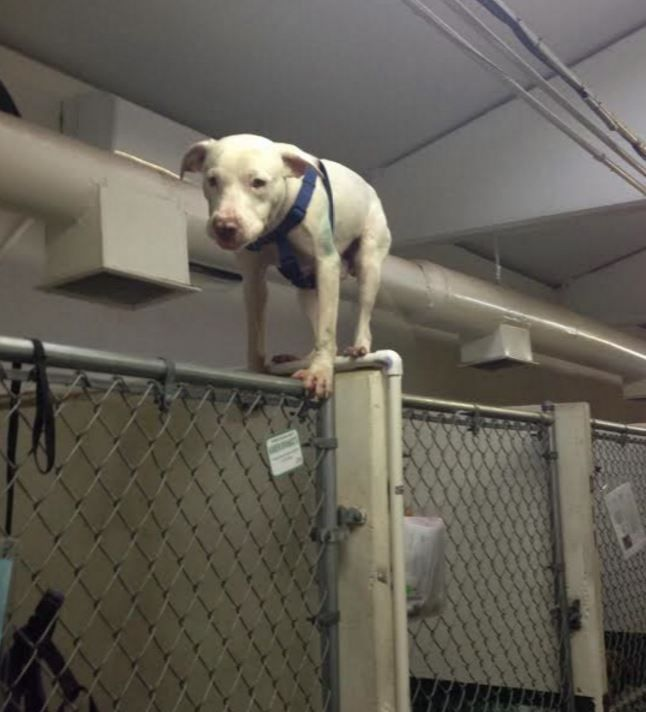See ALL ADOPTABLE DOGS in Humane Society of North Texas > https://www
