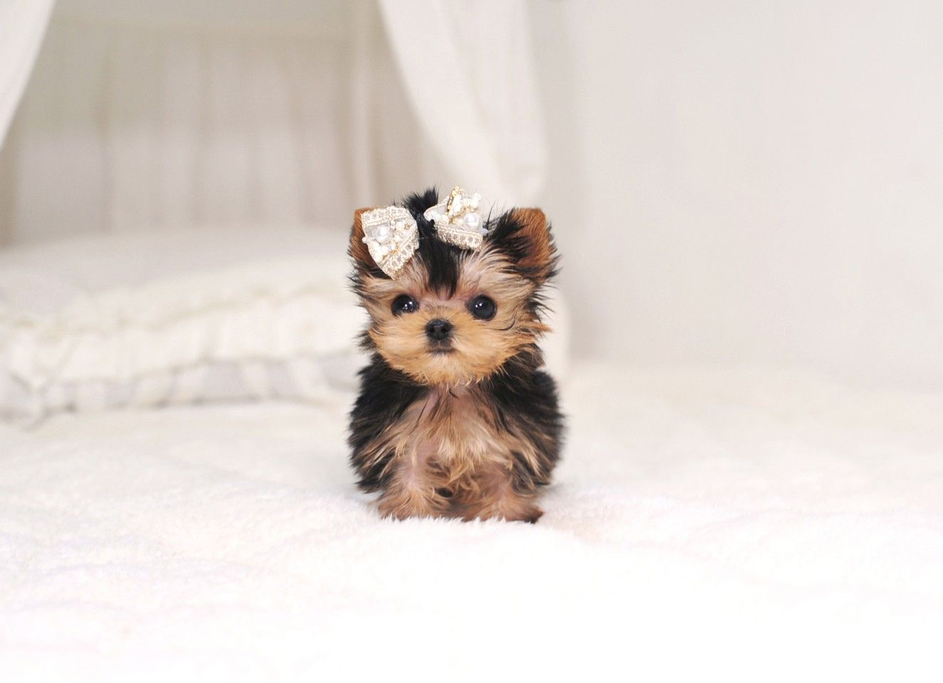 If You Want To See More Beautiful Backgrounds Click On The Link Ogq Backgrounds Hd Cute Baby Dogs Cute Puppies Cute Dogs