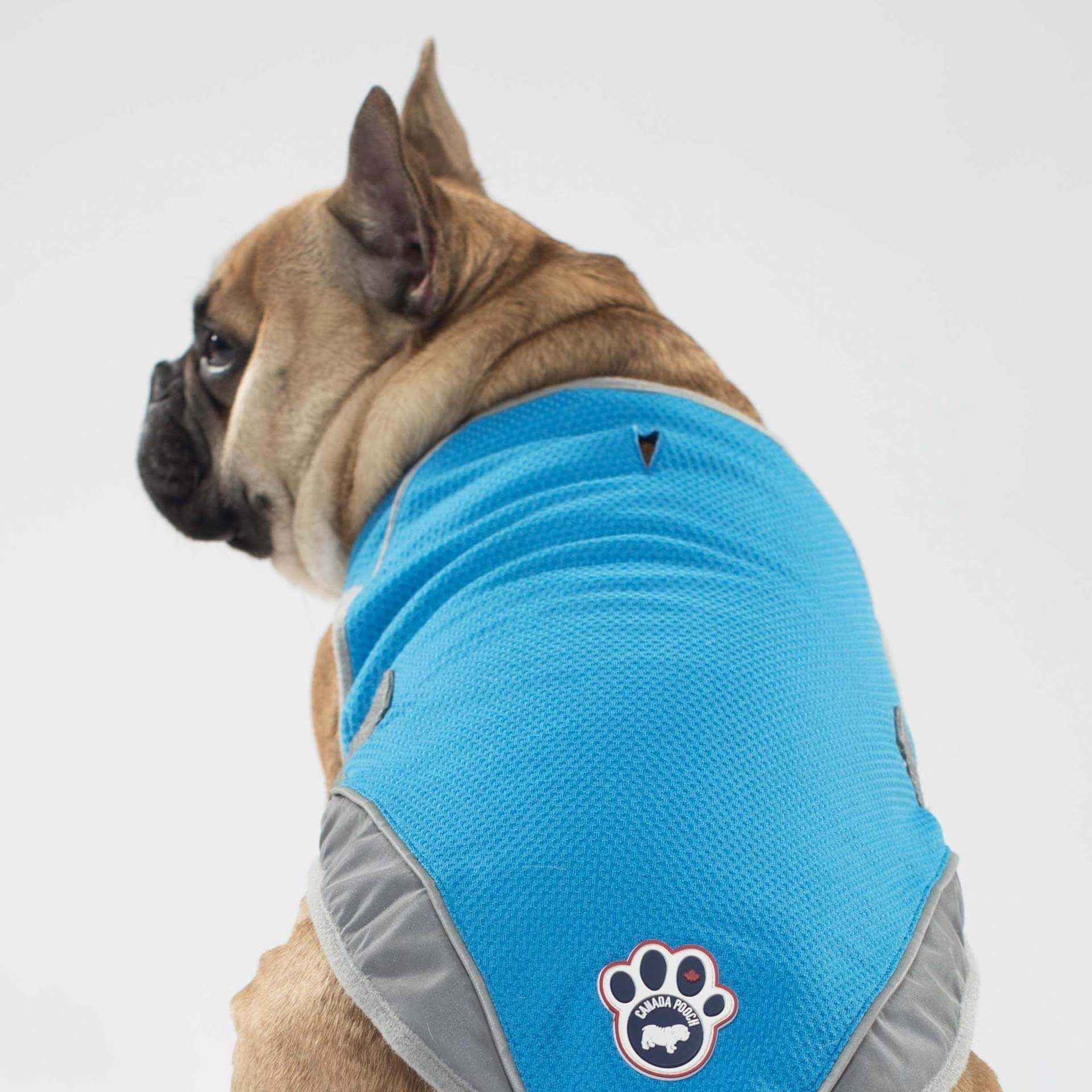 Chill Seeker Dog Cooling Vest Dog Cooling Vest Dogs Chill