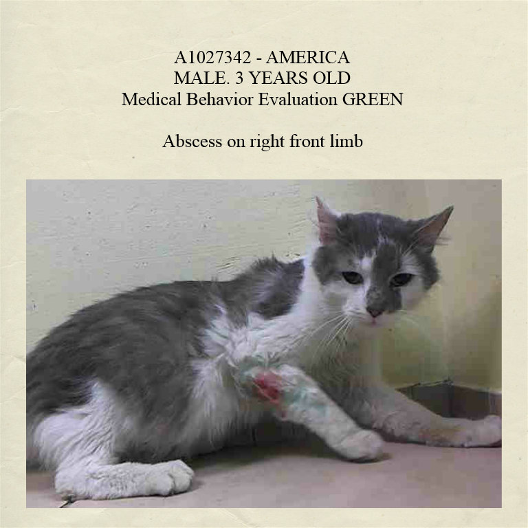 Pulled by Anjellicle Cats Rescue* URGENT! AC&C NYC