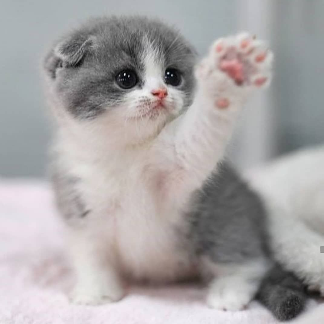 Cute Cats Cute Cats And Kittens Cute Cats Breeds Cute Cat Videos Cute Cats With Big Eyes Fluffy Cat Cute Baby Animals Kittens Cutest Cute Animals