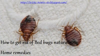 Get Rid Of Bed Bugs Naturally Home Remedies With Images Bed Bug Bites Bed Bugs Treatment Kill Bed Bugs