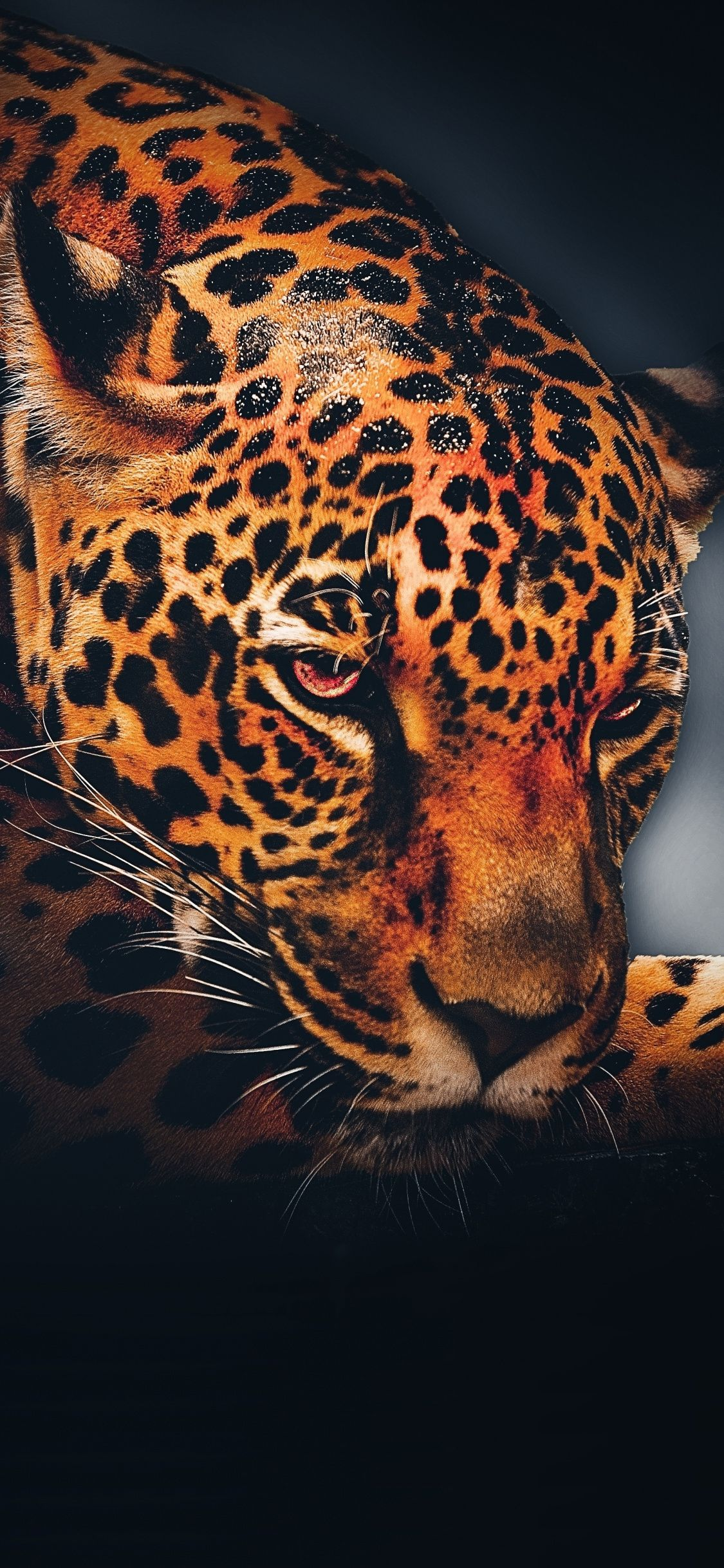 1125x2436 Leopard Animal Relaxed Portrait Wallpaper Animals Animal Wallpaper Jaguar Wallpaper