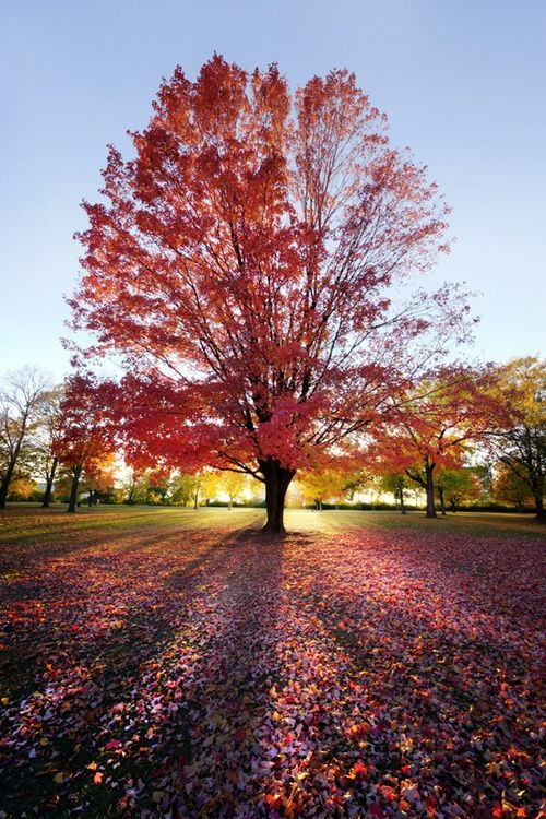 Cherry Blossom Tree Sunset Beautiful Nature Autumn Trees Beautiful Photography