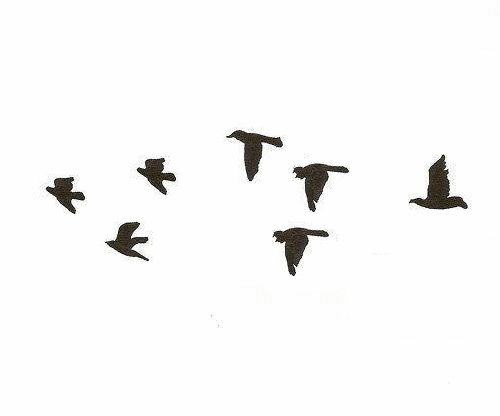 Birds Flight Black And White Minimal Png Tumblr Imagenes Png Png