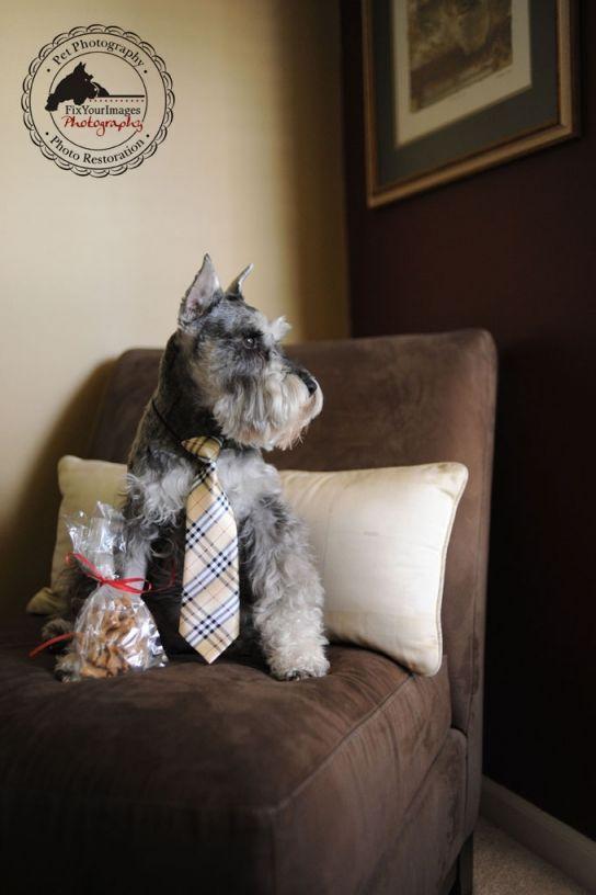 Sneaky Pete Homemade Dog Treats In Lincoln Nebraska Custom