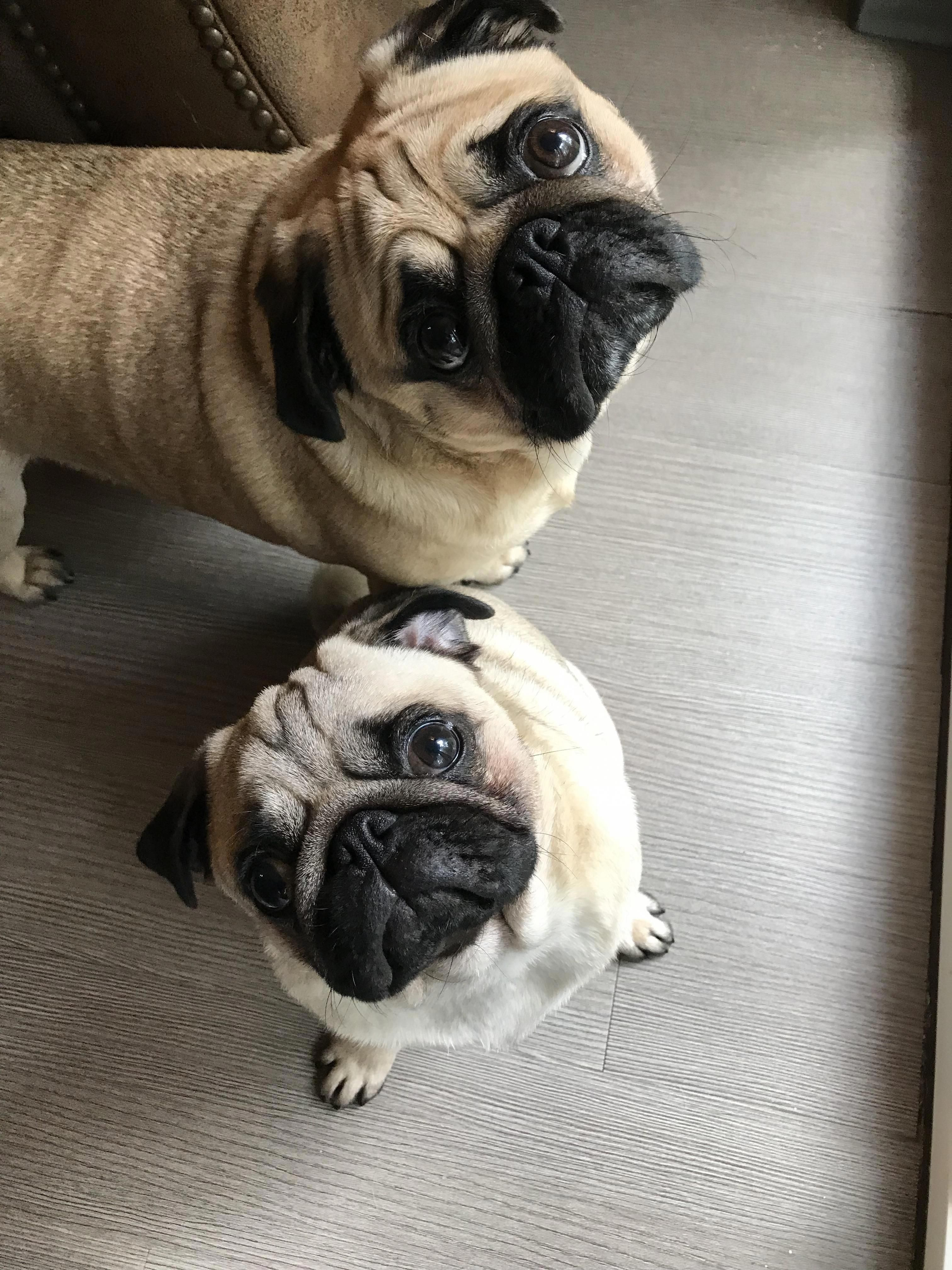 Cute Animals Profile Pic Dogs Baby Dogs Pugs