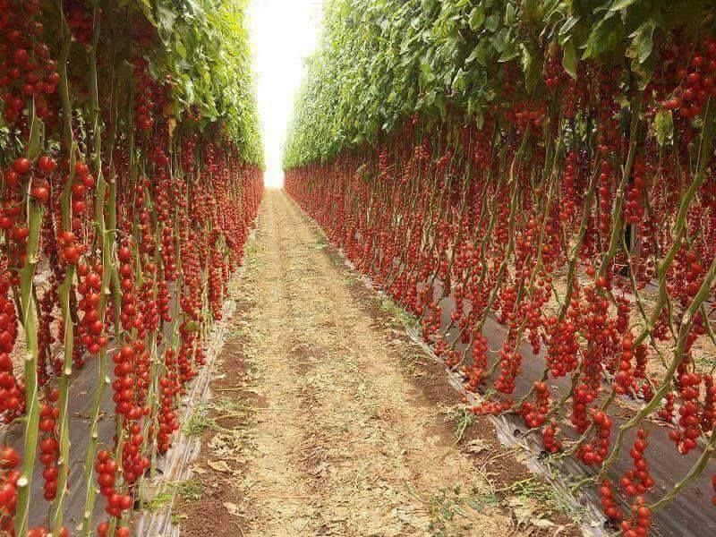 Teaching Organic Farming & Gardening Jobs