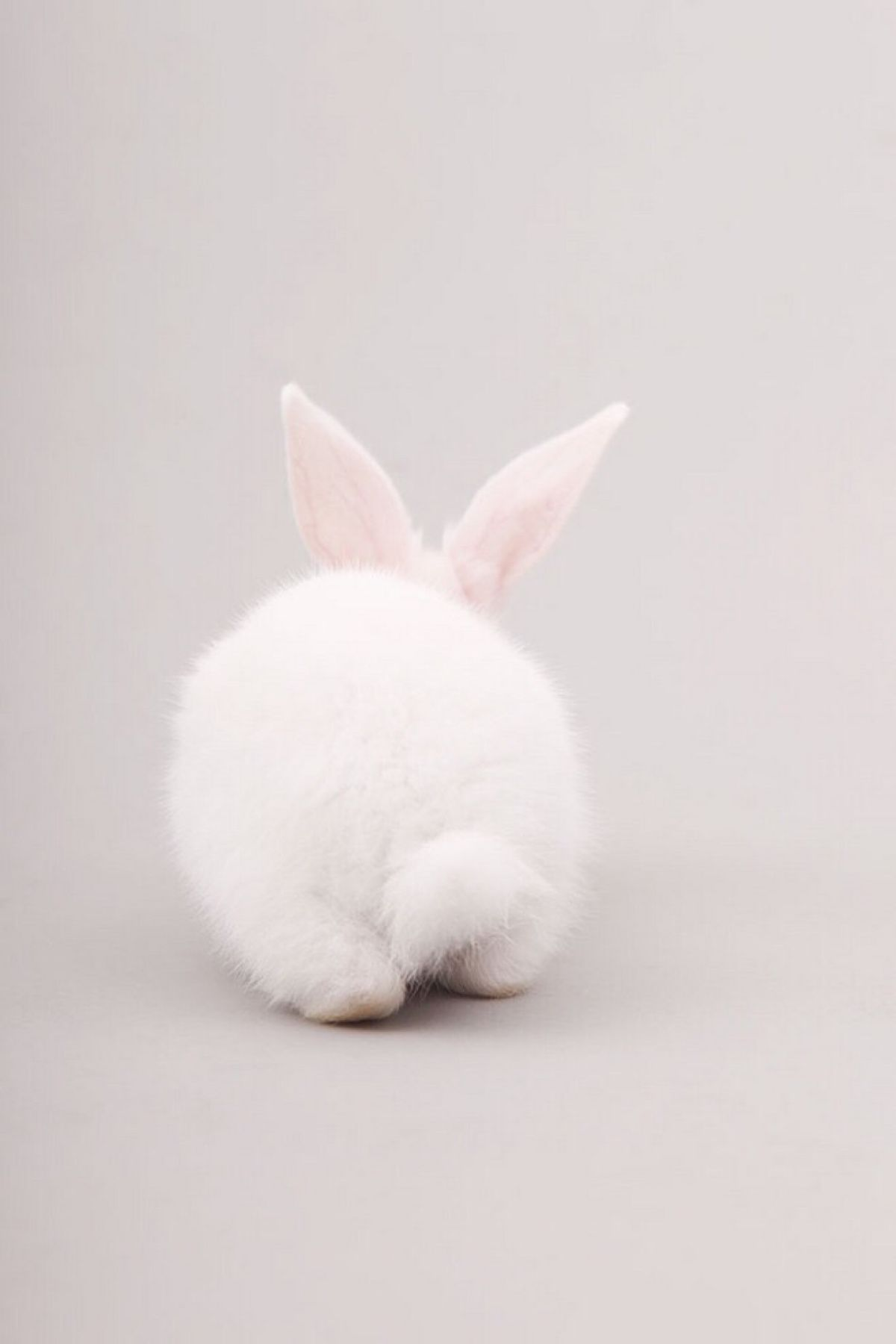 White Fluffy Bunny Rabbit Tail