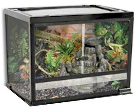 Reptile Exotics Supplies Reptology Glass Reptile Terrarium Reptile Terrarium Terrarium Reptiles