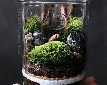 Nestled inside a crystal clear glass vessel is a moss - Giardini in bottiglia ...