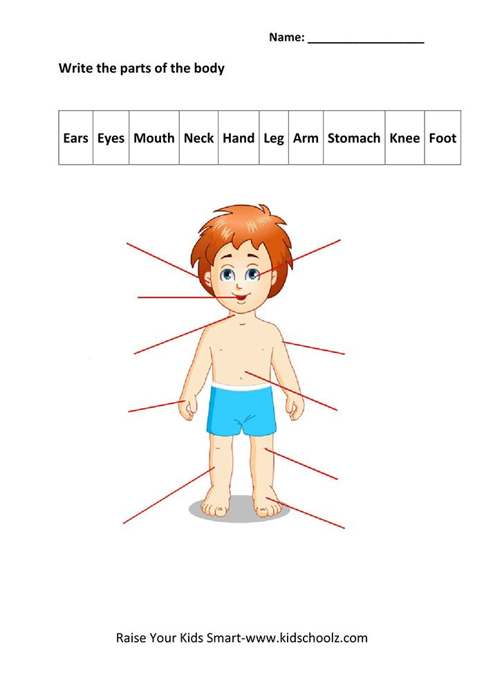 Image Result For Write Body Parts For Ukg Education Pinterest