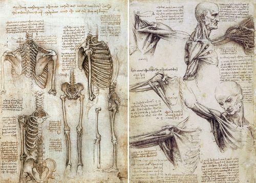 Leonardo Da Vinci encadrée Imprimer-cheval dessin Vintage Antique Photo Artwork