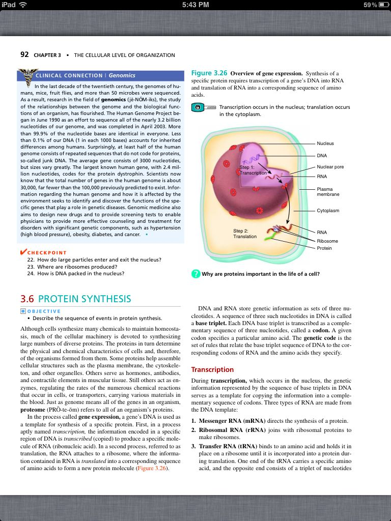 Fantastic Chapter 3 Cells Anatomy And Physiology Ideas - Human ...