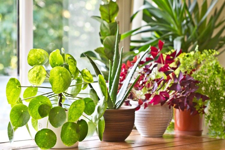These Are The 10 Most Popular Houseplants On Instagram In Case
