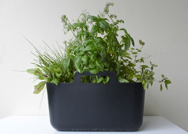 ikea bucket as herb planter (photo by minna jones)