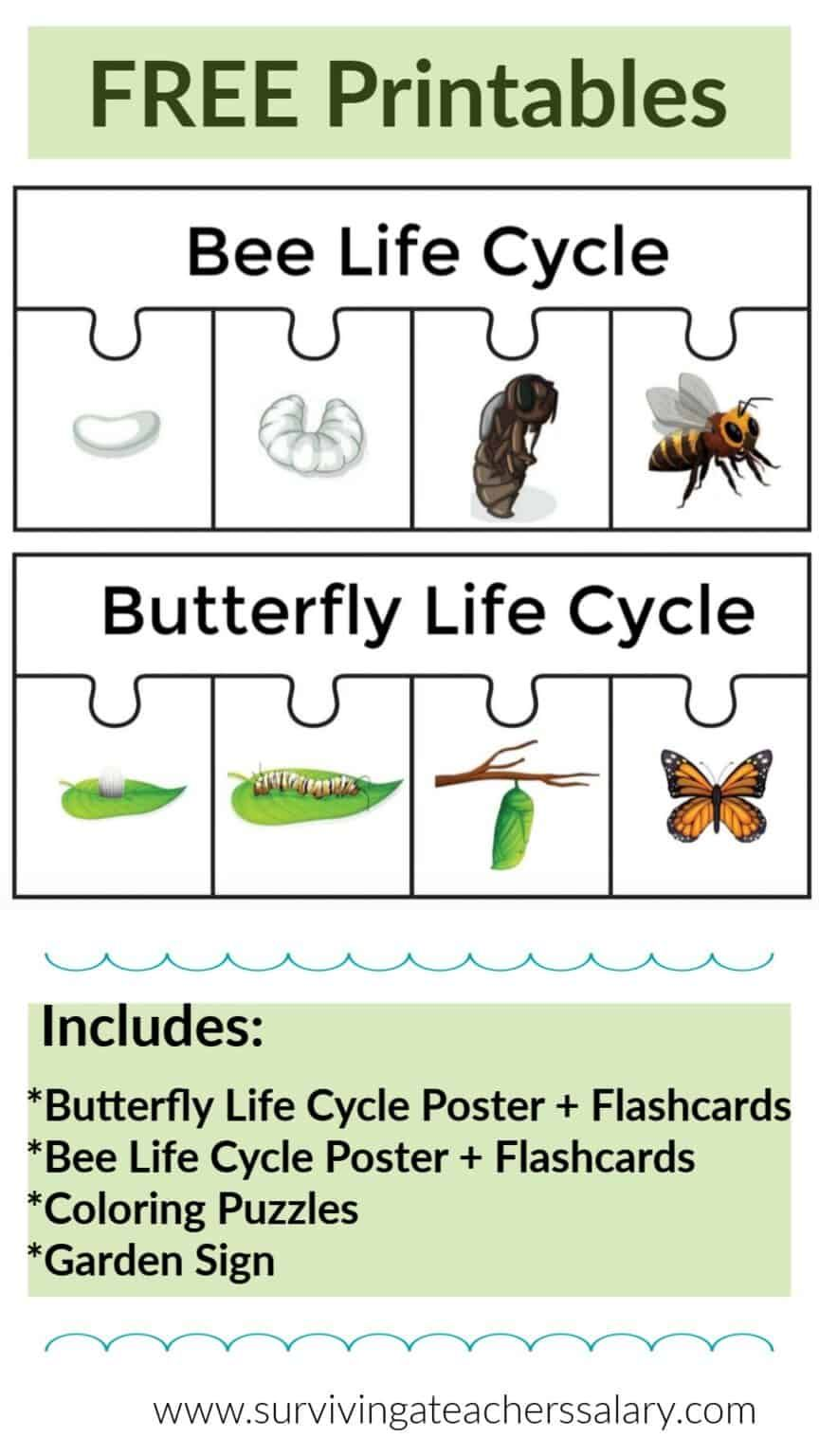 Predownload: Free Bee Butterfly Life Cycle Printables Puzzles Butterfly Life Cycle Bee Life Cycle Butterfly Life Cycle Lessons [ 1536 x 864 Pixel ]