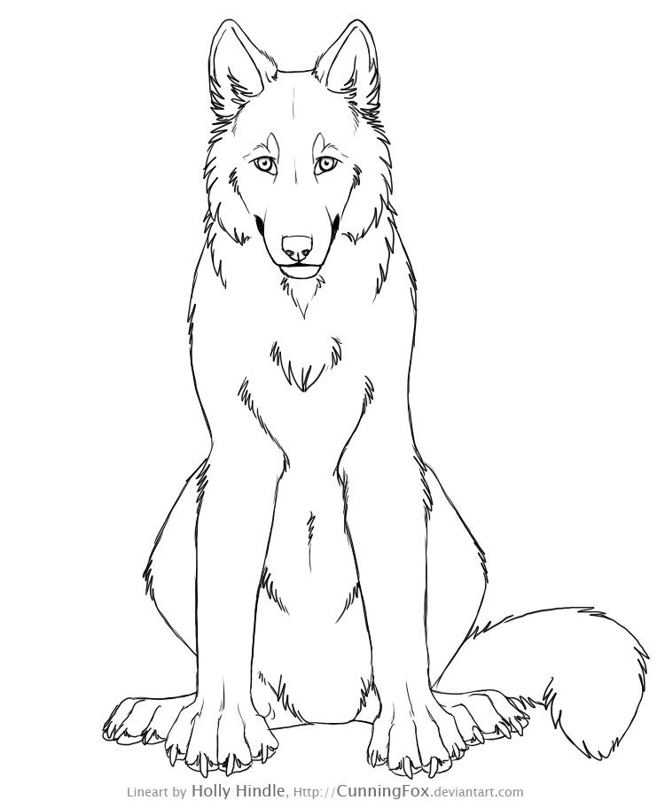 Free Wolf Lineart Front View By Bear Hybrid Anime Wolf Wolf Sketch Wolf Head Drawing