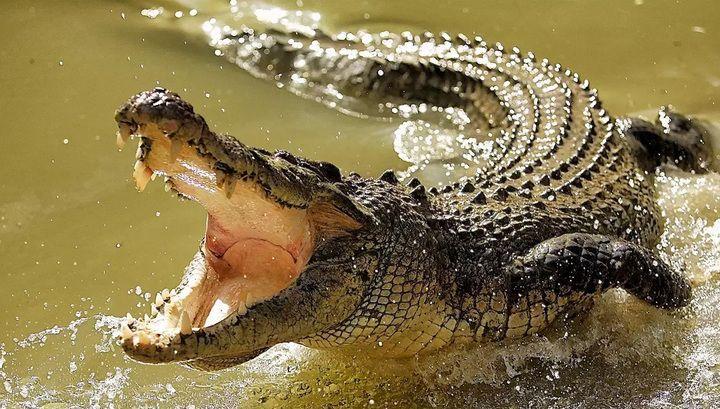 """Картинки по запросу """"гребнистый крокодил"""""""
