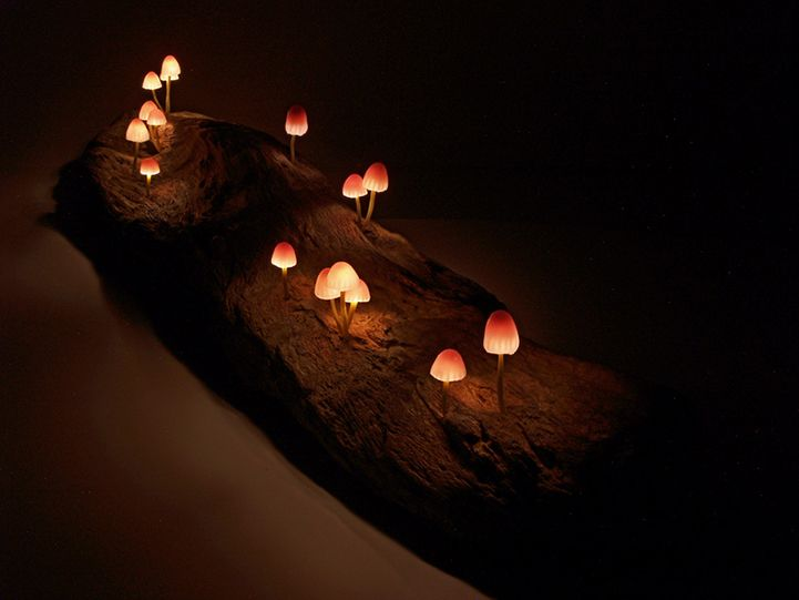 Led Mushroom Lights By Japanese Designer Yukio Tanako Of The Great Mushrooming Is It Sad That If I Had This Id Just Be Walking Tiny Pikmin Miniatures