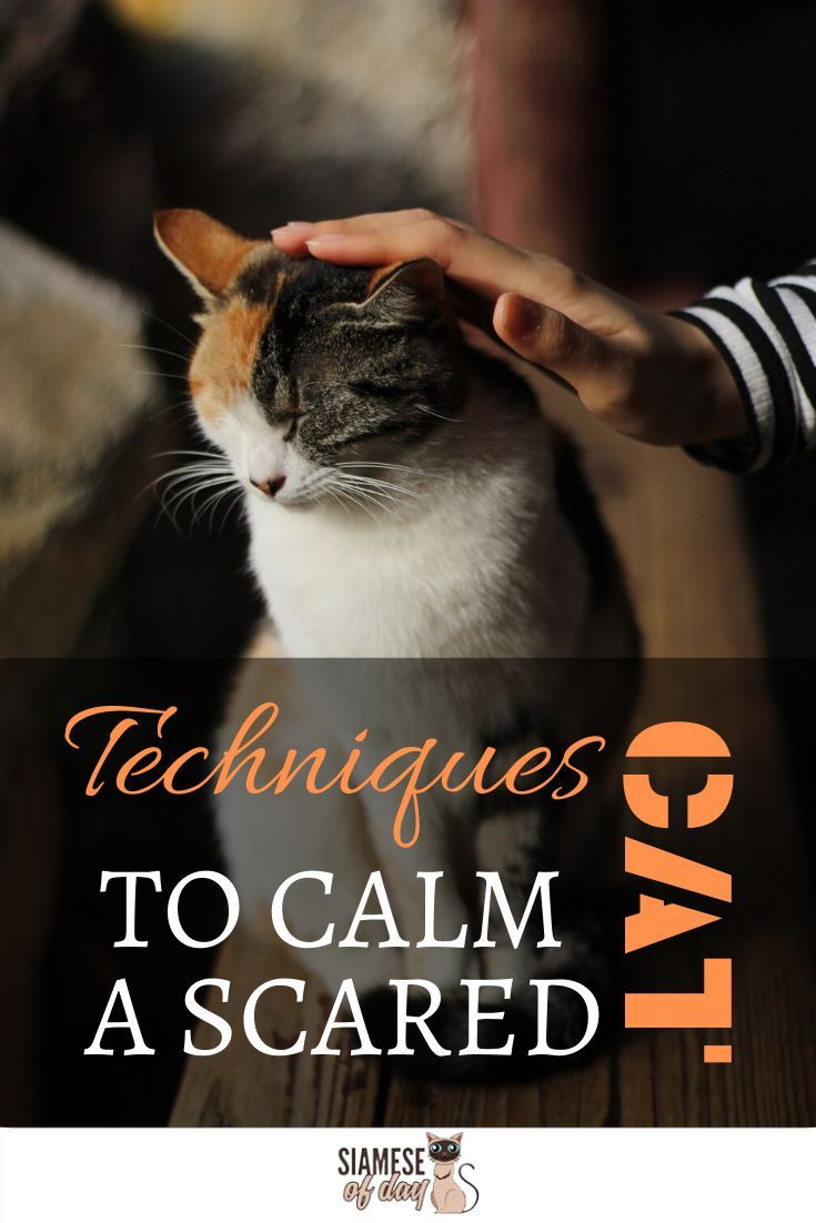 how to calm a nervous cat