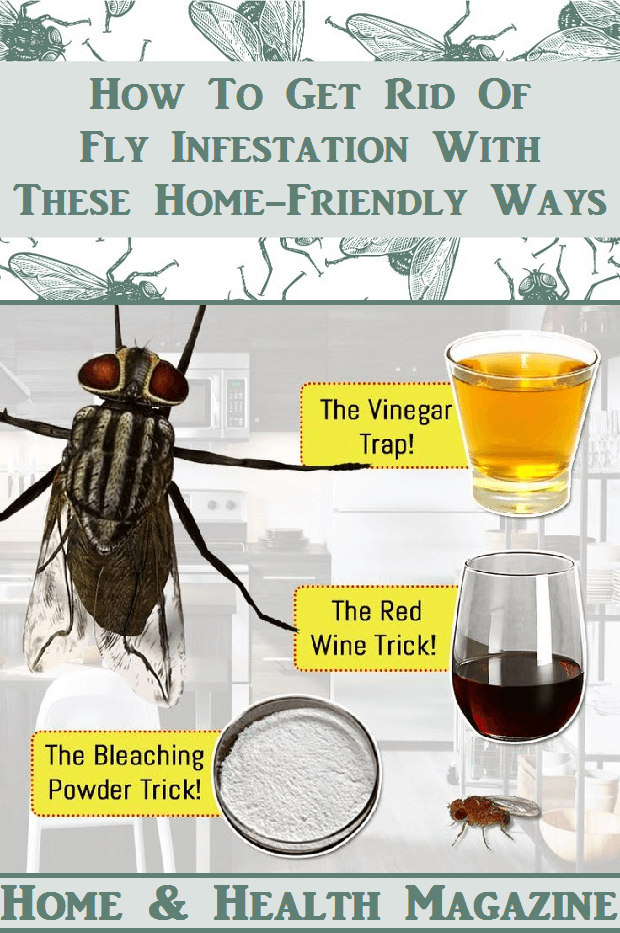 How To Get Rid Of House Flies In Home