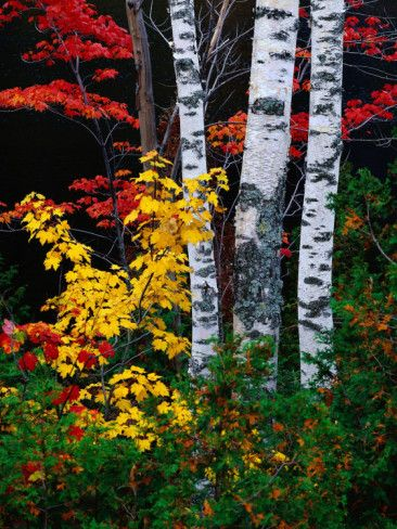 Fall Color, Old Forge Area, Adirondack Mountains, NY Photographic Print by Jim Schwabel #fallcolors