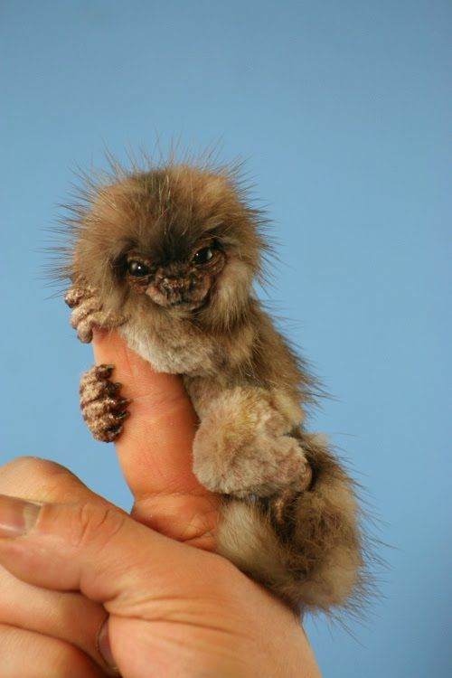 The Cutest Pictures Of Pygmy Marmosets Pygmy Marmoset Marmoset Monkey Cute Animals