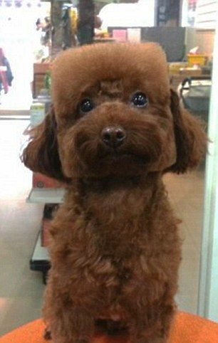 The Shape Of Things To Come For Dog Grooming Pets Have Their Fur