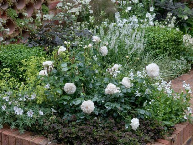 e6d803421e4e4b9dbf7cbdce4f4c5afb - Pictures Of Rose Gardens With Companion Plants