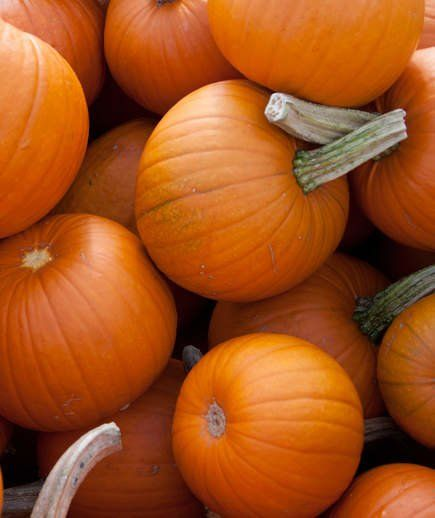 10 Crazy Facts About Pumpkins