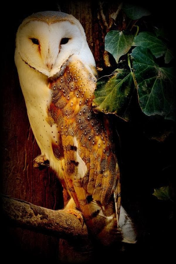 Knight Guardian Barn Owl