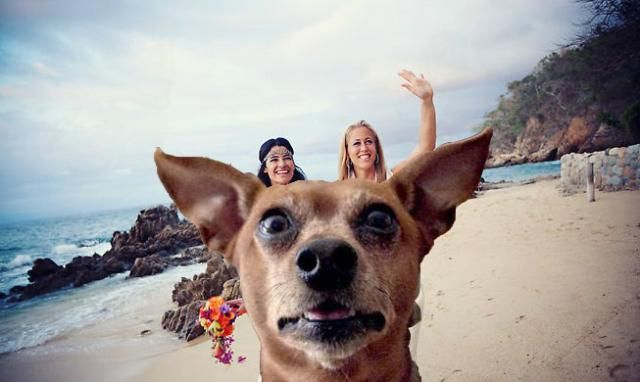Surf S Up 20 Very Funny Photobombs Taken At The Beach Animals