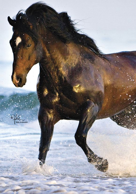 Cassidy Hiber Horse Stuff And Country : Photo | Horses