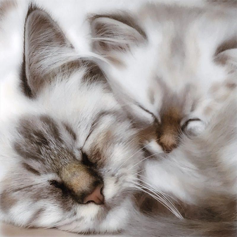 Pin by Javier Vera on amazing cats, Beautiful